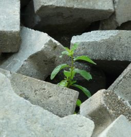 Las crisis: oportunidades para emprender